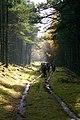 Kylebank Plantation - geograph.org.uk - 95084.jpg