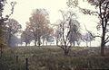 LYS03trees in fog.JPG