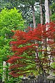 La forêt autour du temple Taiyuin à Nikko (Japon) (43273193782).jpg
