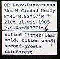 Lachnomyrmex longinoi psw7771-6 label 1.jpg