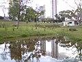 Lago das Rosas - panoramio (2).jpg