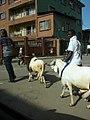 Lagos goats for sale.jpg