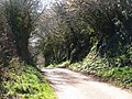 Lane to Blackheath Farm - geograph.org.uk - 1222947.jpg