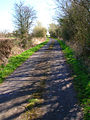 Lane to Brenzett Green - geograph.org.uk - 393928.jpg