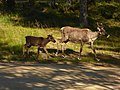 Lapland - Urho Kekkonen National Park - 20180728174308.jpg