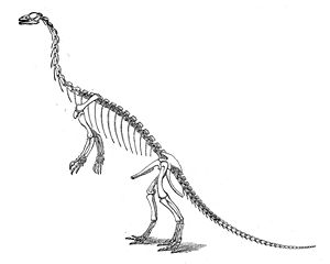 Anchisaurus - Anchisaurus skeleton restoration by O.C. Marsh.