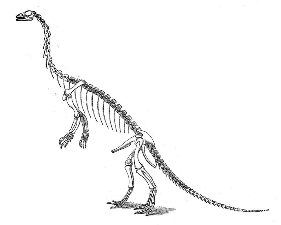 Large marsh anchisaurus