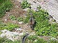 Largo di Torre Argentina cat 13.jpg