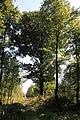 Lasy Łączańskie - panoramio (9).jpg