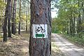 Lasy okolic Soboty, gm. Rokietnica 07.JPG