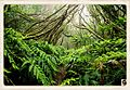 Laurel forest.jpg