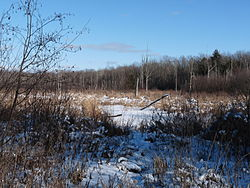 Much of Lawrence is wild land, accessed only by hunters and winter loggers who drive in over frozen swamps.