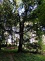 Leśmierz, park przyfabryczny-013.JPG
