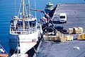 Le palangrier côtier ''Norðsøki'' (2).jpg