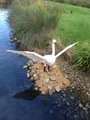 Lego swan sculpture at London Wetland Centre.png