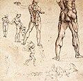 Leonardo da vinci, studi anatomici 1504-06.jpg