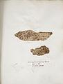 Lichenes Helvetici IX X 1833 012.jpg