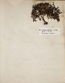 Lichenes Helvetici I II 1842 014.jpg