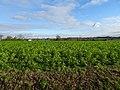 Linselles, Nord-Pas-de-Calais, France (2).jpg
