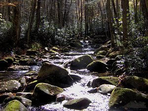 Little River (Tennessee) - Little River at Three Forks, a mile or so below its source