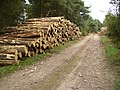 Logs harvested from Waterloo Plantation - geograph.org.uk - 553628.jpg