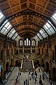 London - Cromwell Road - Natural History Museum 1881 by Alfred Waterhouse - Arch over the Central Hall - View North & Down on Charles Darwin & Diplodocus' Tail.jpg