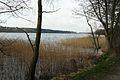 Lusowskie Lake from north (2).JPG