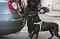 MOD Police Search Dog MOD 45152829.jpg