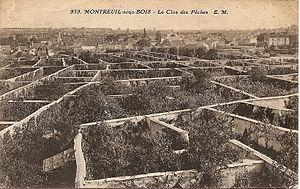 Carte postale d'époque montrant les clos des Murs à pêches de Montreuil