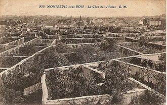 Urban agriculture - Peaches in Montreuil, Seine-Saint-Denis, France