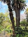 Madeira em Abril de 2011 IMG 1729 (5663186623).jpg