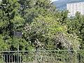 Madeira em Abril de 2011 IMG 1796 (5663658749).jpg