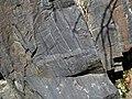 Magnetite banded iron formation (Soudan Iron-Formation, Neoarchean, ~2.69 Ga; Rt. 169 roadcut between Soudan & Robinson, Minnesota, USA) 1 (19035471992).jpg