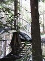 Magnolia Plantation and Gardens - Charleston, South Carolina (8556572710).jpg