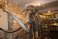 Mammoth Skeleton (Barcelona).jpg