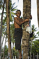 Man collects toddy. Kiribati 2007. Photo- Lorrie Graham (10698208676).jpg