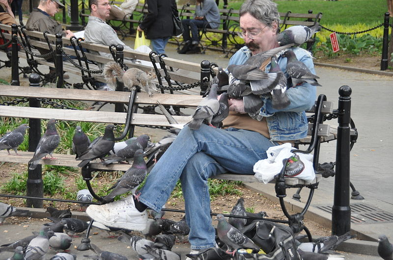 File:Man with many pigeons in Washington Square Park, New York.jpg