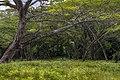 Mangrove in sunny day.jpg