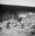Mannen aan het dorsen van hennep in een schuur in Helmond, Bestanddeelnr 254-4260.jpg