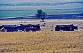 Maraş-Graben 03 10 1984 Traktornomaden in der Maraş Ovası.jpg