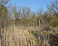 Marsh - Guelph, Ontario 2020-05-13 (03).jpg