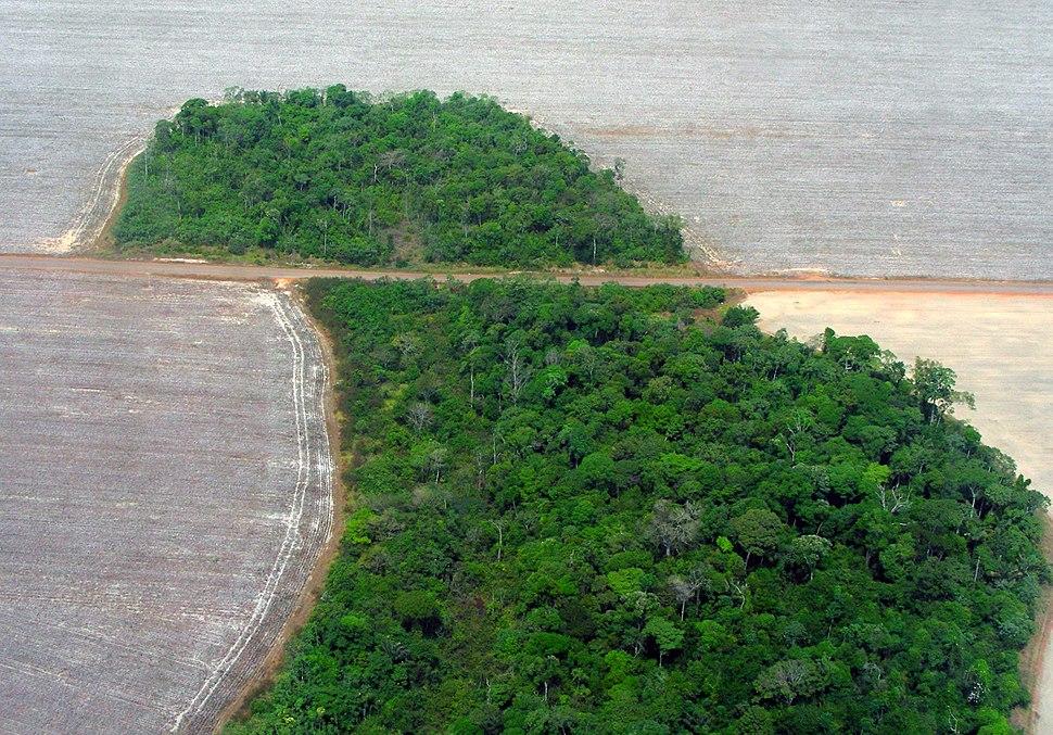 Mato Grosso deforestation (Pedro Biondi) 12ago2007