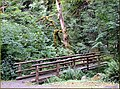 McKenzie Loop Drive, Footbridge, OR 8-29-13zq (10122752684).jpg