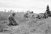 Men of the Lancashire Fusiliers crawl cautiously through a cornfield near St Contest, Normandy, 9 July 1944. B6754