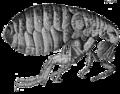 Micrographia Scheme 34.png