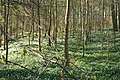 Middleage-fields-Wilhelmsborg-skov.jpg