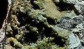 Mineraly.sk - variscit.jpg