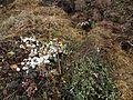 Misthaufen und Kompost.JPG