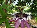 Mistic flower.JPG