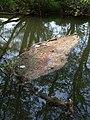 Mixed flotsam, River Tone - geograph.org.uk - 802201.jpg